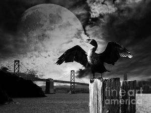 Night Of The Cormorant . By Wingsdomain.com