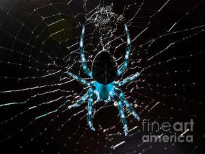 Blue Spider .. By Wingsdomain.com