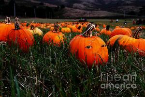The Pumpkin Patch . When Nobody Is Looking . By Wingsdomain.com