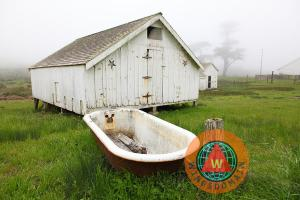 Outdoor Bath At The Old Pierce Point Ranch In Foggy Point Reyes California By Wingsdomain Art And Photography