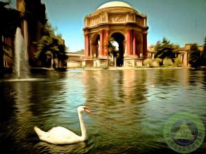 Swan At The San Francisco Palace Of Fine Arts By Wingsdomain Art And Photography