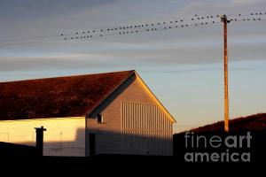 Wingsdomain Thanks Art And Photo Collector From Lincoln NE Who Purchased A Fine Art Gliclee Birds On A Wire