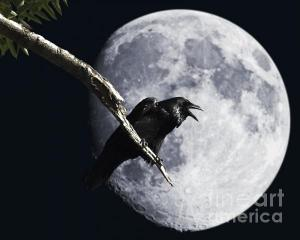 Wingsdomain Thanks Art And Photo Collector From Madison WI Who Purchased A Fine Art Gliclee Raven Barking At The Moon