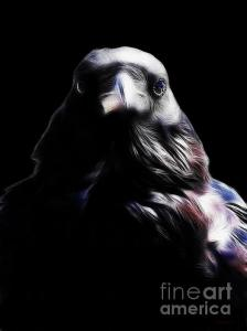 Wingsdomain Thanks Art And Photo Collector From Merriott Somerset Who Purchased A Fine Art Gliclee Print Of Raven In My Dreams