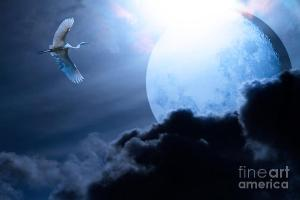 Blue Moon . By Wingsdomain.com Art And Photography