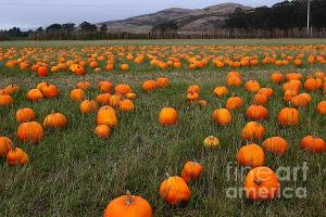 Wingsdomain Thanks Art And Photo Collector From Quesnel BC Who Purchased A Fine Art Gliclee Print Of Halloween Pumpkin Patch