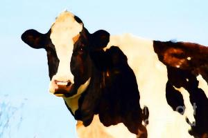 Wingsdomain.com Thanks Art And Photo Collector From Edmunston NB Who Purchased A Fine Art Gliclee Print Of Milk Cow