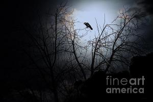 The Night The Raven Entered My Dreams . By Wingsdomain.com Art And Photography